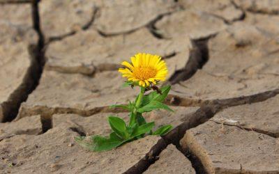Qu'est-ce que la psychologie positive ?